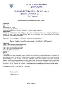 Allium ursinum n. 4