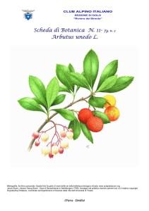 Arbutus unedo fg. 2