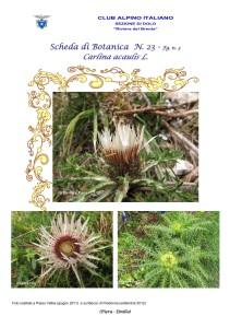 Carlina acaulis fg. 3