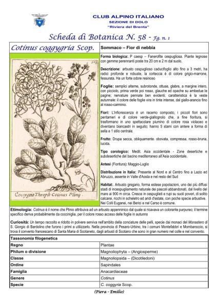 Scheda di Botanica n. 58 Cotinus coggygria fg. 1 - Piera, Emilio