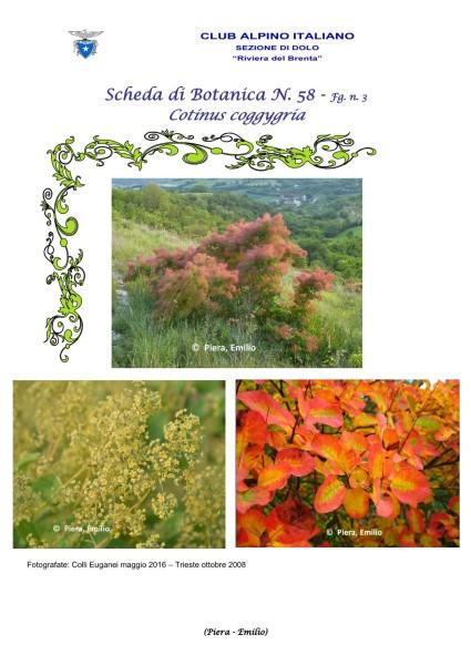 Scheda di Botanica n. 58 Cotinus coggygria fg. 3 - Piera, Emilio