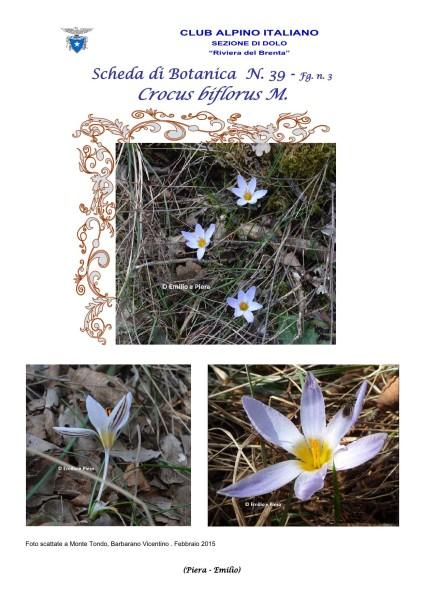 Scheda di Botanica N. 39 Crocus biflorus fg. 3 - Piera, Emilio
