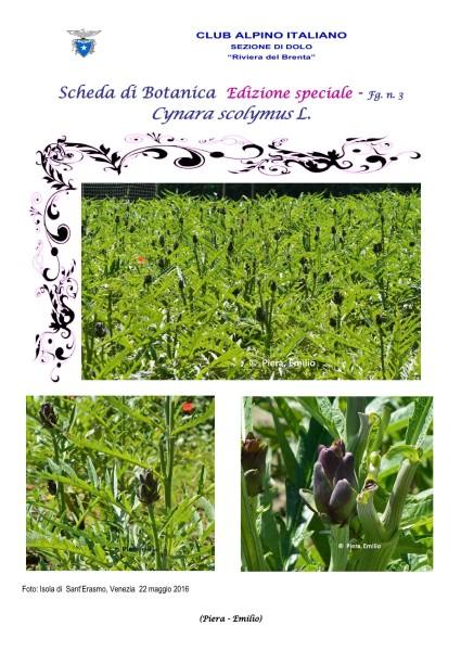 Scheda di Botanica Edizione Speciale N.53_bis fg. 3 Cynara scolymus - Piera, Emilio