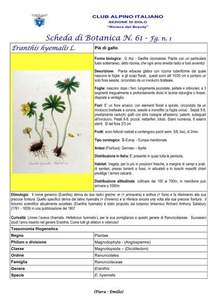 Scheda di Botanica N. 61 Eranthis hyemalis fg. 1