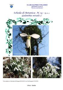 Galanthus nivalis fg. 3