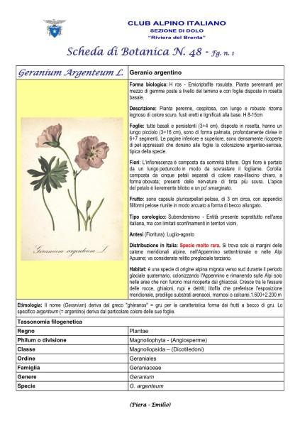 Scheda di Botanica N. 48 Geranium argenteum fg. 1 - Piera, Emilio