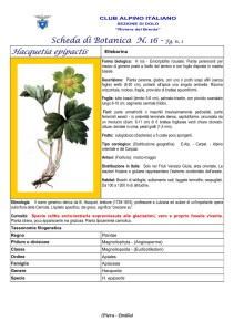 Hacquetia epipatics fg. 1