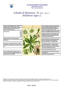 Helleborus niger fg. 2