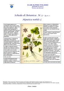Hepatica nobilis fg. 2