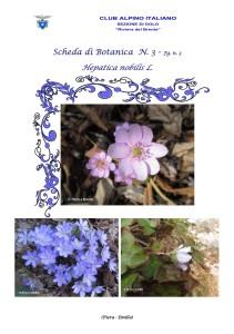 Hepatica nobilis fg. 3