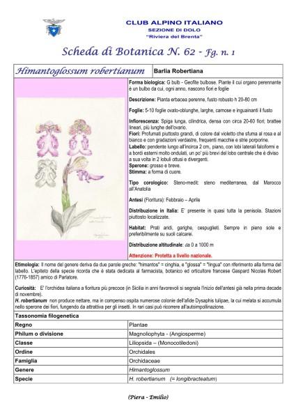 Scheda di Botanica N. 62 Himantoglossum robertianum fg.1 - Piera, Emilio
