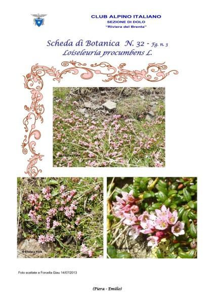 Scheda di Botanica n. 32 Loiseleuria Procumbens - Piera, Emilio