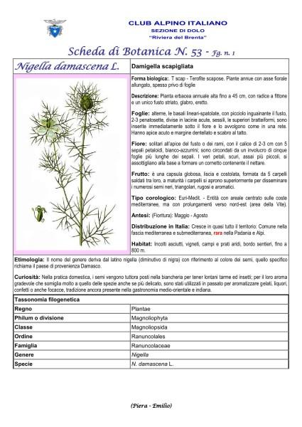 Scheda di Botanica N. 53 Nigella damascena fg. 1 - Piera, Emilio