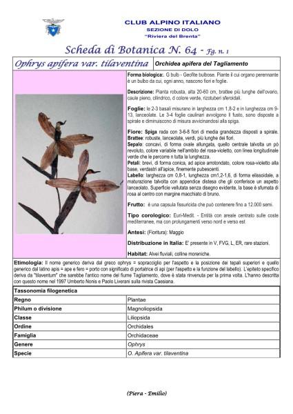 Scheda di Botanica n 64 Ophrys tilaventina fg.1 - Piera, Emilio