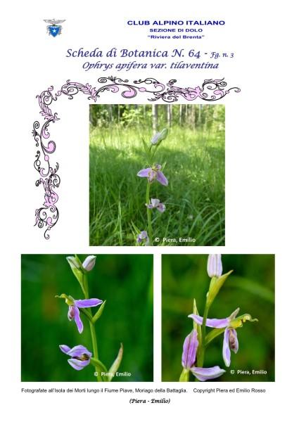 Scheda di Botanica n 64 Ophrys tilaventina fg.3 - Piera, Emilio