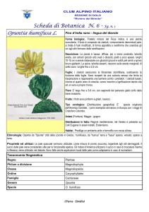 Opuntia humifusa fg. 1