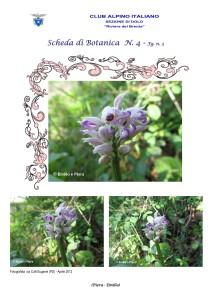 Orchis simia fg. 3