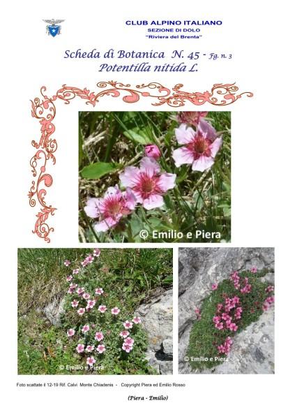 Scheda di Botanica n. 45 Potentilla nitida fg. 3 - Piera, Emilio