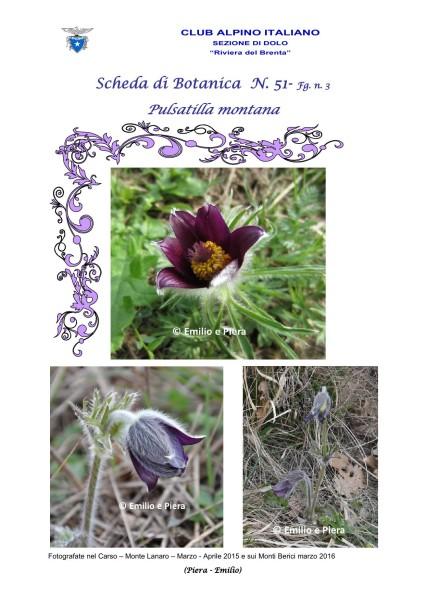 Scheda di Botanica N. 51 Pulsatilla montana fg. 3 - Piera, Emilio