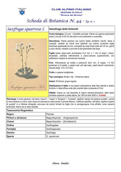 Scheda di Botanica n. 44 Saxifraga squarrosa fg. 1 - Piera, Emilio