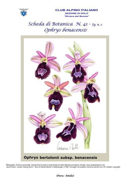 Scheda di Botanica N. 41 fg. 2 - Piera, Emilio