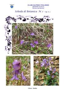 Soldanella alpina fg. 3