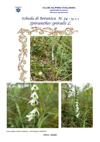 Scheda di Botanica n. 34 Spiranthes spiralis - 3 - Piera, Emilio